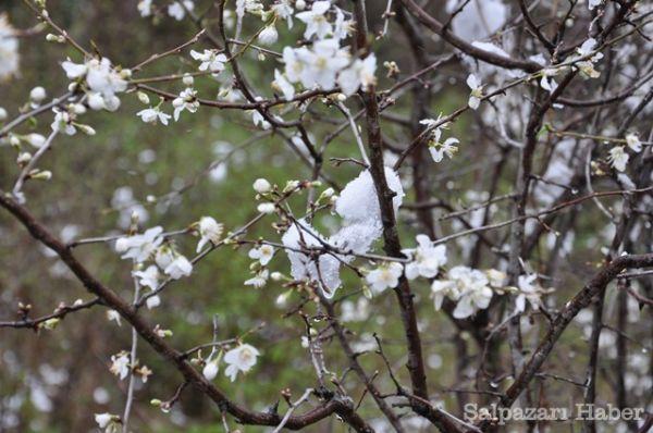 Ağasar'da İlkbahar