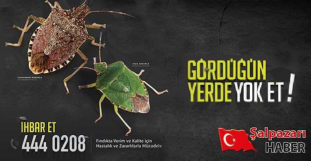 Trabzon'da alarm verildi, fotoğraf çekip atın!
