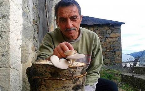 Ali Osman Gülay Avrupa Kayın Mantarı'nı yetiştirmeyi başardı..