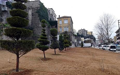 Kavşak çalışması nedeniyle sökülen ağaçlar yeni yerlerinde