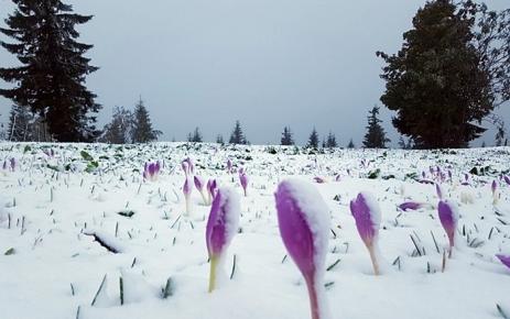 Yılın ilk karı yağdı.